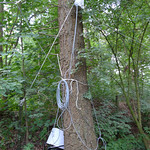 router in the tree
