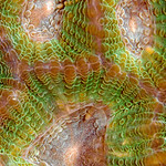 """Scream"" : This coral detail captured our eye due to the resemblance to a screaming face"